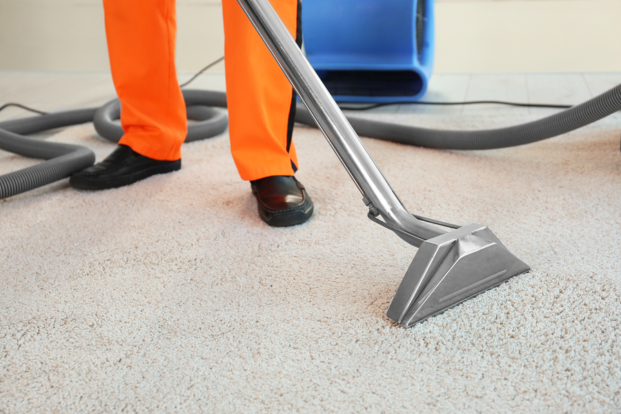 Dry Cleaner S Employee Removing Dirt From Carpet In Flat
